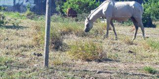 Moradores reclamam que terrenos estão sendo usados como pastos